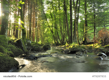 Kostenloses Stockfoto: Wald