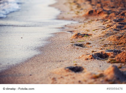 Beach sand tracks Sea nature landscape
